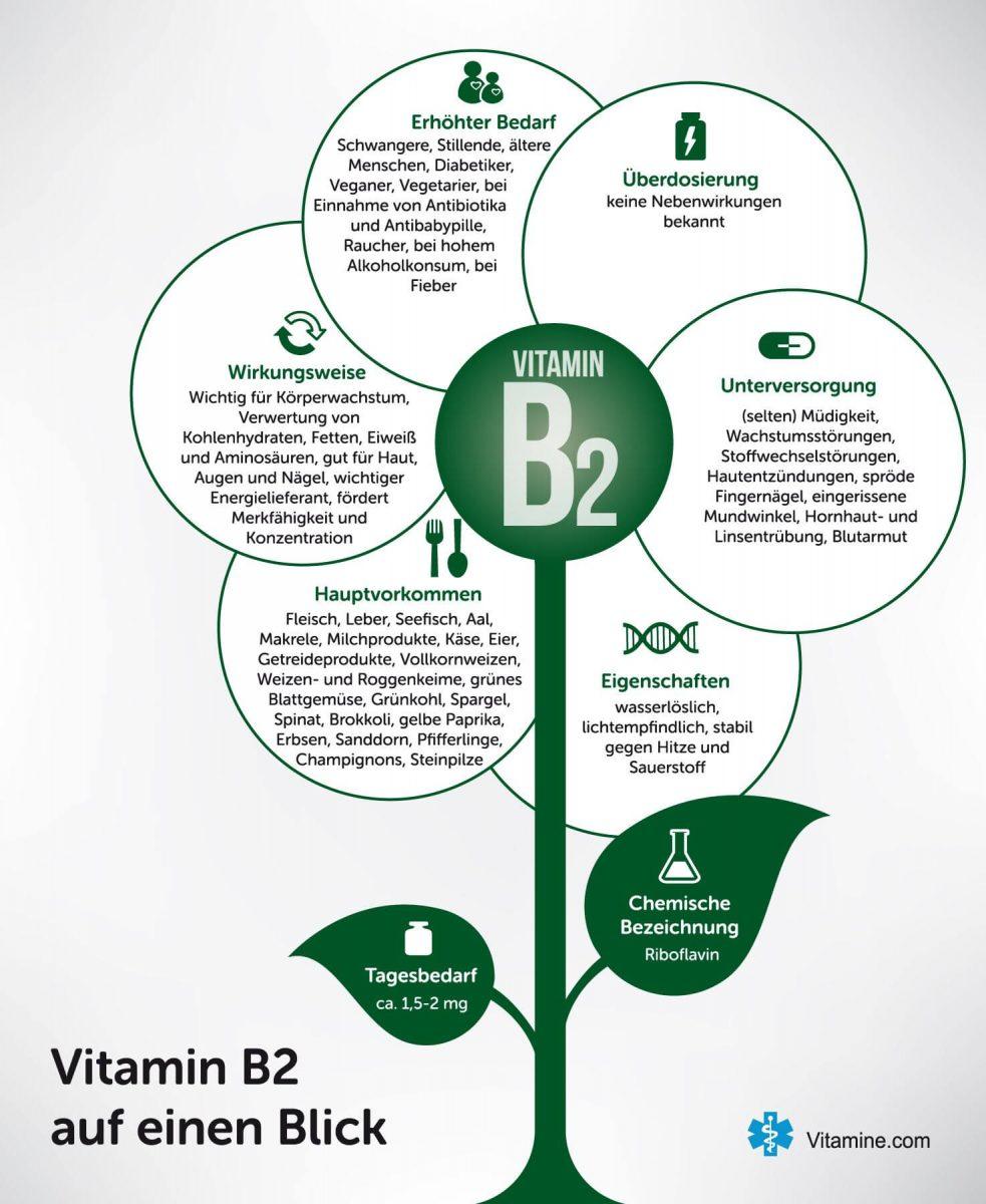 Vitamin B1 Infografik