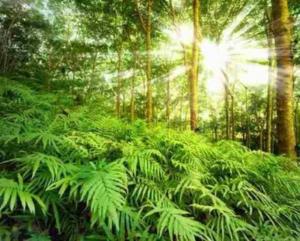Heilpflanzen aus dem Regenwald