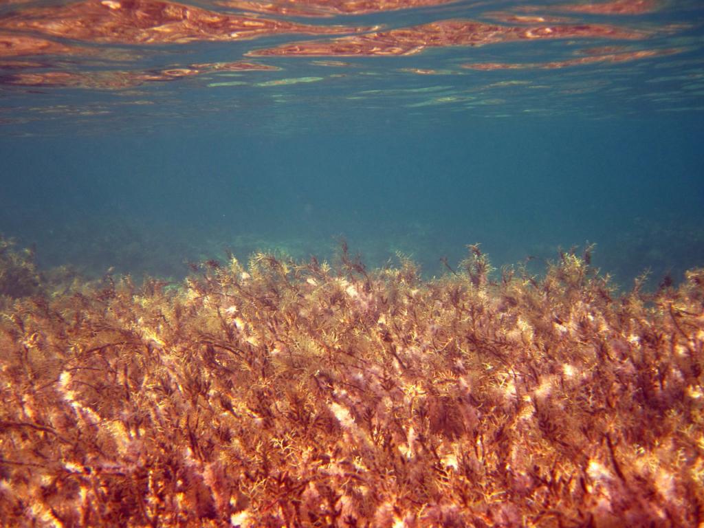 Astaxanthin in Algen