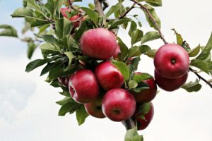 Apfelpektin-Lebensmittel