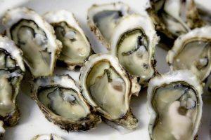 Austern-Lebensmittel