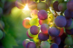 Weintrauben-Lebensmittel