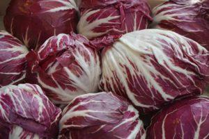 Radicchio Salat Lebensmittel