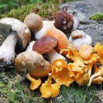Vitamine Pilze